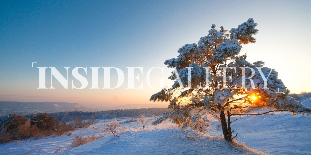 fine art fotografie snowy tree inside gallery. Black Bedroom Furniture Sets. Home Design Ideas