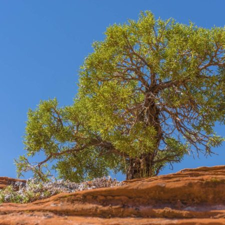 ThomasNeye_Fotograf_Wonder_Tree